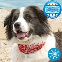 Hunde-Kühlhalsband - rot -