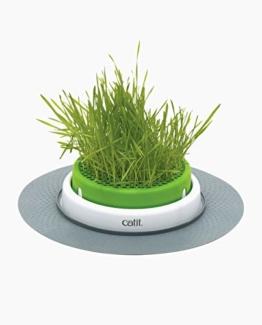 catit Grastopf - Grass Planter - 1
