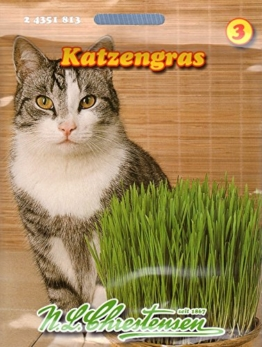 Katzengras Saatmischung - 1