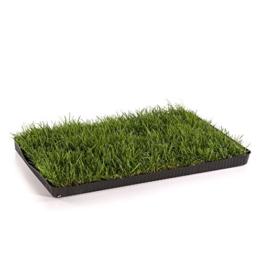 MIAU KATZENGRAS | 60x40cm echtes, saftiges Gras | sofort nutzbar - kein aussäen | kein Samen sondern echtes Gras | weiche, sanfte Grashalme statt scharfer Kanten | Katzengras gegen Haarballen | Spielwiese gegen Langeweile - 1