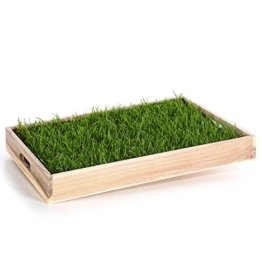 Miau Katzengras inklusive Dekotablett 'Pure Nature' | 60x40cm echtes, saftiges Gras | sofort nutzbar - kein aussäen | (Pure Nature) - 1