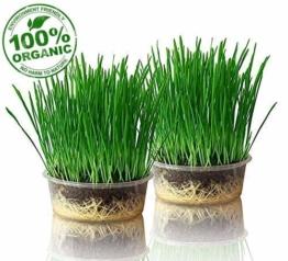 purr paw 2er Pflanzset für Katzengras, Set aus Bio-Samen, Schale und Kompost, fertige Bio-Saatmischung - 1