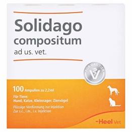 Solidago Compositum ad us. vet. Ampullen - 1